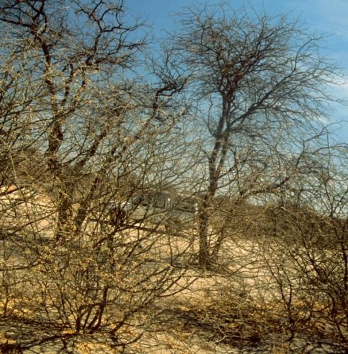 Botswana - Kalahari 30