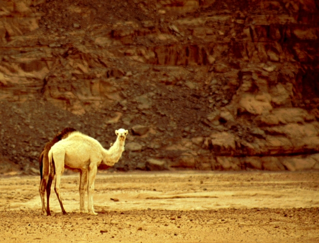 Algeria - Sahara 137