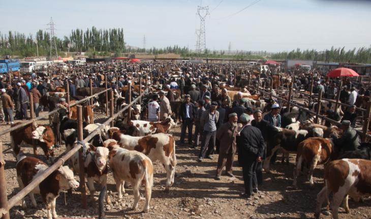 China - Xinjiang 273 - Kashgar - Sunday animal market