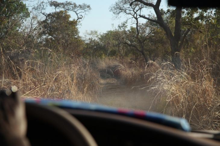 Burkina Faso - National Parks W & Arly 001