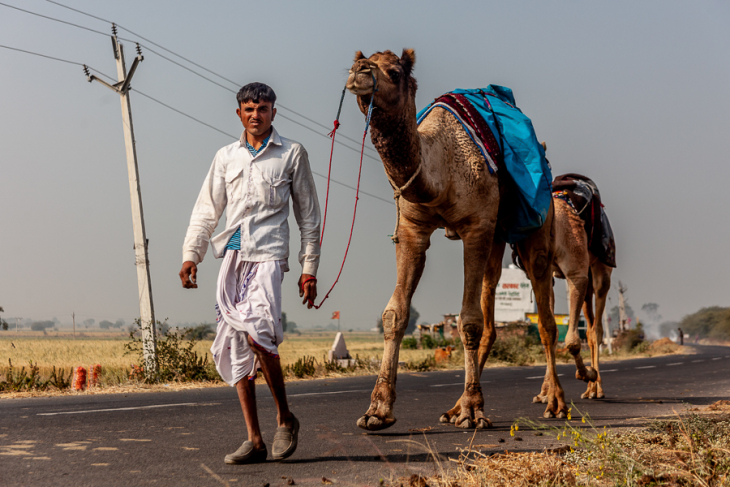 India - Madhya Pradesh -  On the road 001