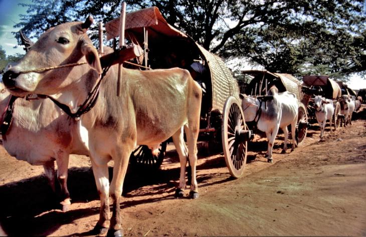 Myanmar - Bagan 001