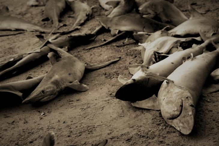 Mauritania 050 - Cap Iwik