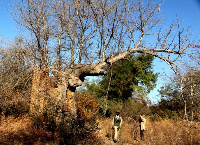Burkina Faso - National Parks W & Arly 002