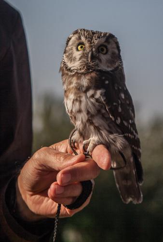 Kazakhstan - Bird training 005