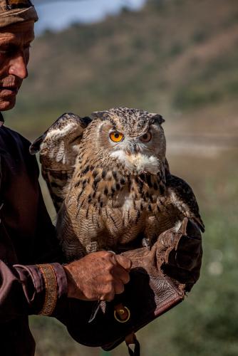 Kazakhstan - Bird training 006