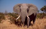South Africa - Kruger NP 007
