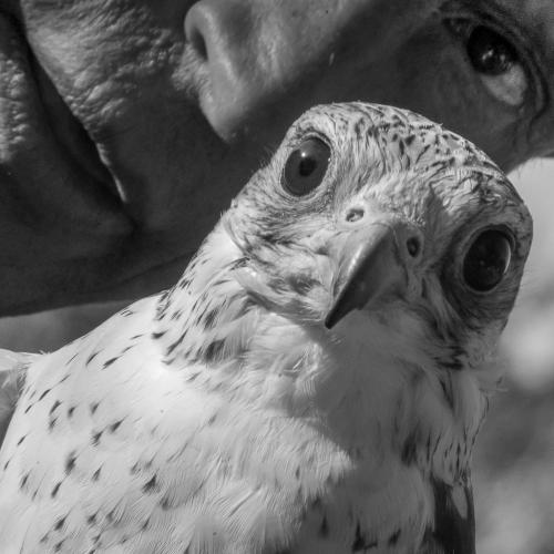 Kazakhstan - Bird training 010
