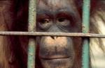Malaysia - Borneo, Semengok Wildlife Rehabilitation Center 010