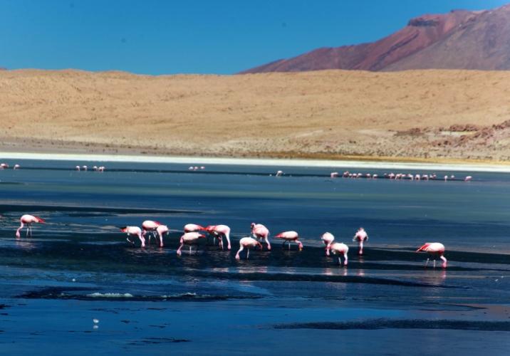 Bolivia - Itinerary Sur Lipez-Tupiza 013 / Laguna Canapa