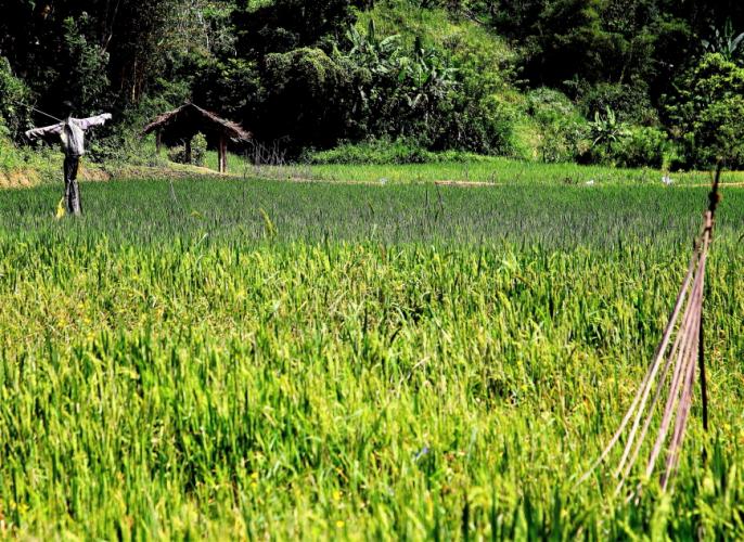 Sri Lanka - Kandy surroundings 014