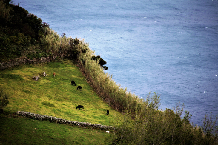 Portugal - Azores - Flores 014