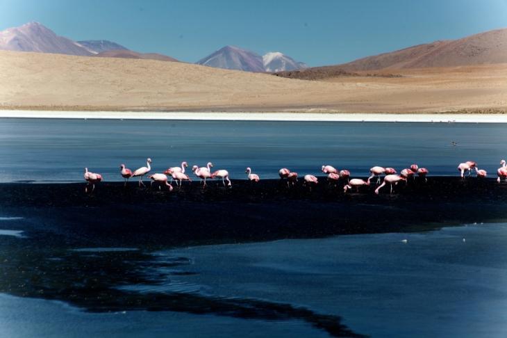 Bolivia - Itinerary Sur Lipez-Tupiza 014 / Laguna Canapa