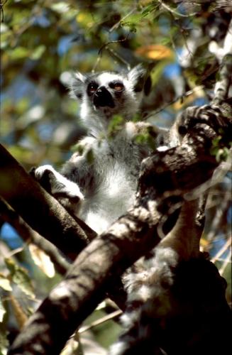 Madagascar - Isalo 014