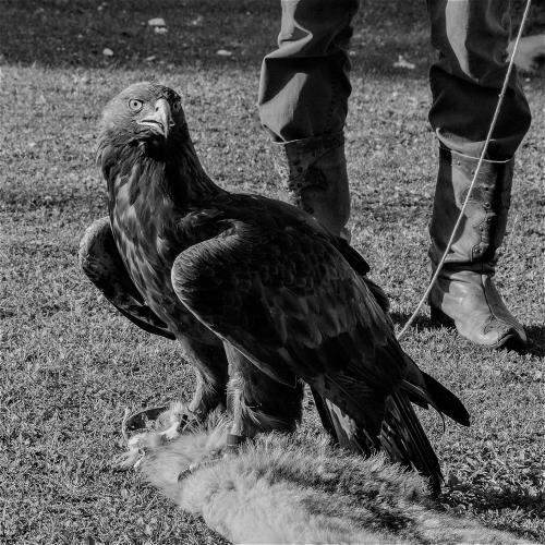 Kazakhstan - Bird training 015