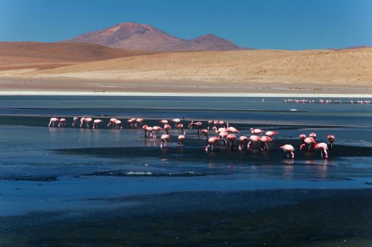 Bolivia - Itinerary Sur Lipez-Tupiza 015 / Laguna Canapa