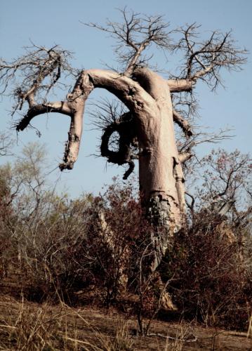 Burkina Faso - National Parks W & Arly 015