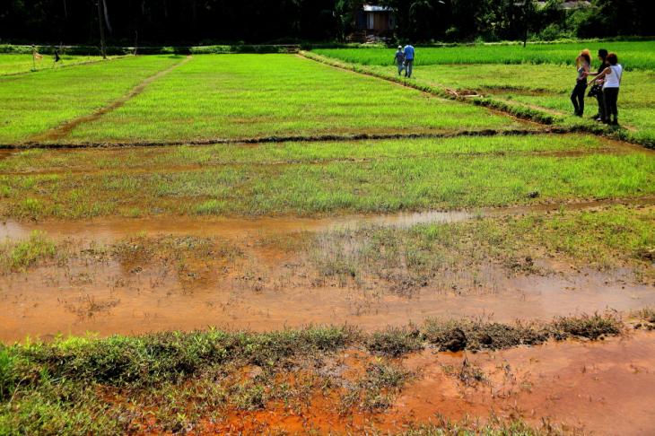 Sri Lanka - Kandy surroundings 017