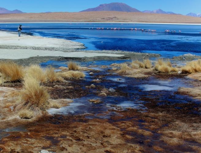Bolivia - Itinerary Sur Lipez-Tupiza 017 / Laguna Canapa