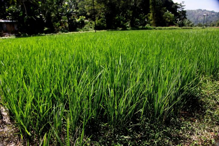 Sri Lanka - Kandy surroundings 018