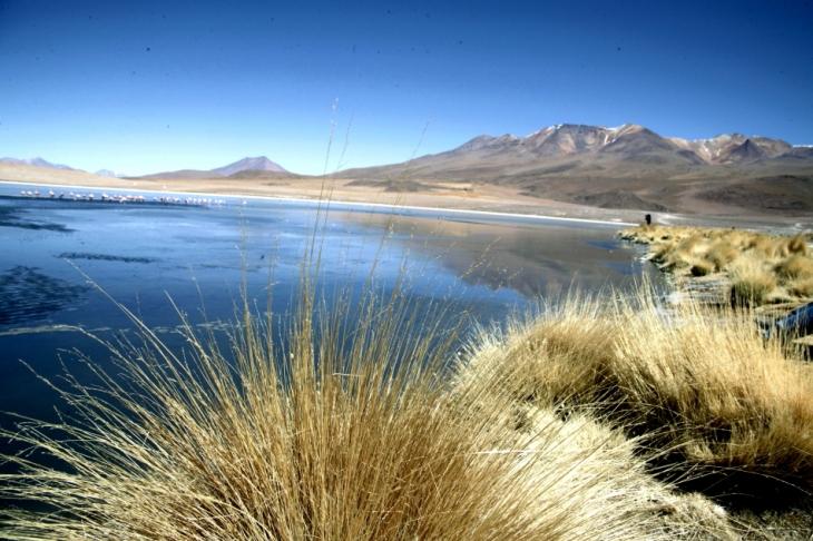 Bolivia - Itinerary Sur Lipez-Tupiza 018 / Laguna Canapa