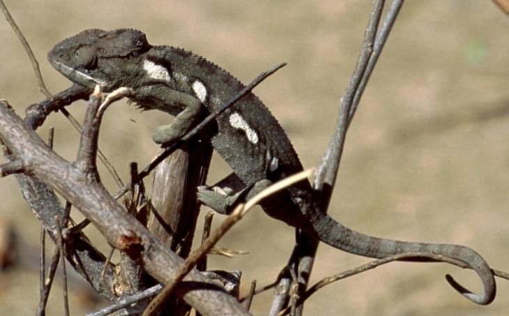 Madagascar - Isalo 018