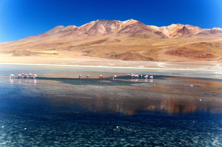 Bolivia - Itinerary Sur Lipez-Tupiza 019 / Laguna Canapa