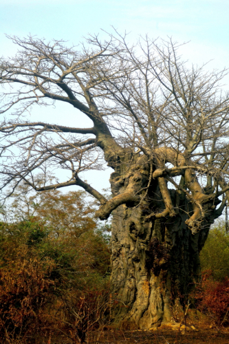 Burkina Faso - National Parks W & Arly 019