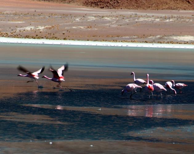 Bolivia - Itinerary Sur Lipez-Tupiza 021 / Laguna Canapa