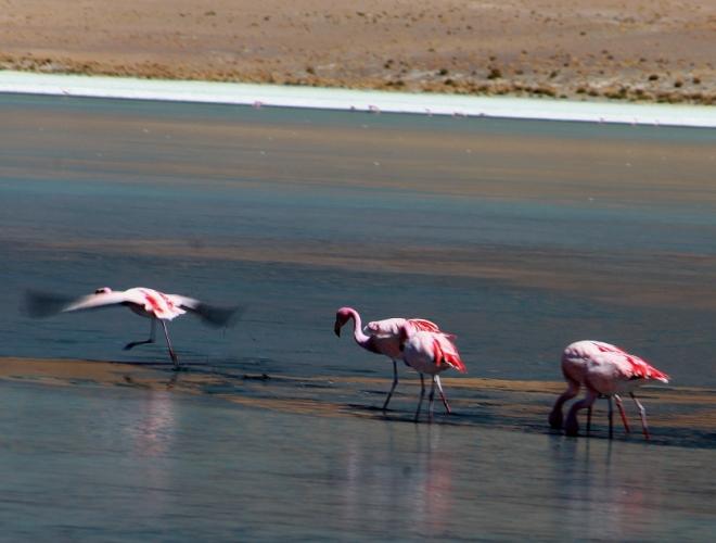 Bolivia - Itinerary Sur Lipez-Tupiza 022 / Laguna Canapa
