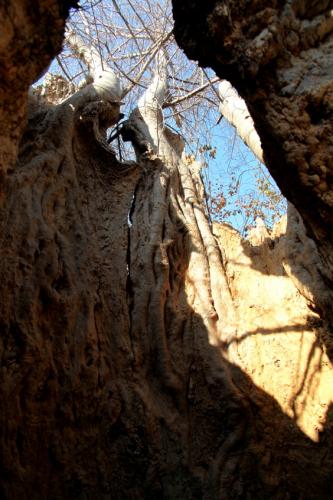 Burkina Faso 025 - Sacred baobab