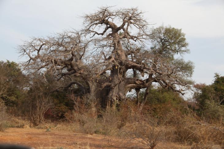 Burkina Faso - National Parks W & Arly 026