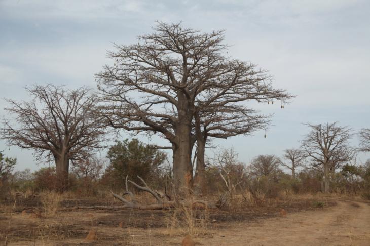 Burkina Faso - National Parks W & Arly 027
