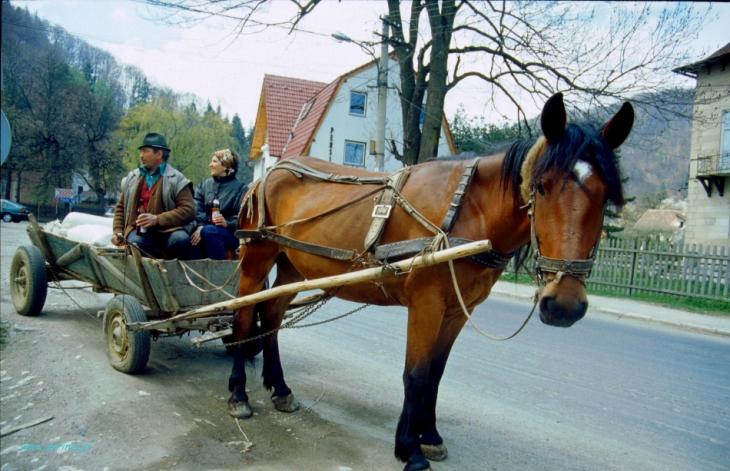 Romania - Bran area 028