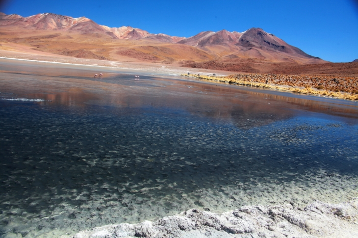 Bolivia - Itinerary Sur Lipez-Tupiza 029 / Laguna Hedionda