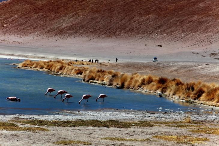 Bolivia - Itinerary Sur Lipez-Tupiza 030 / Laguna Hedionda