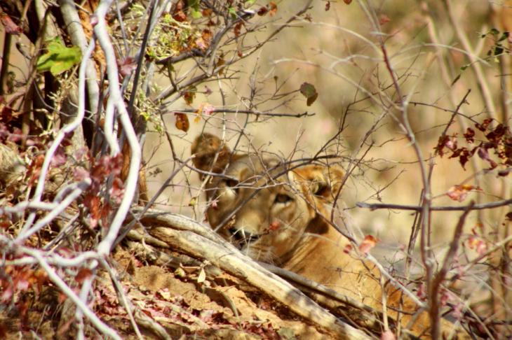 Burkina Faso - National Parks W & Arly 031