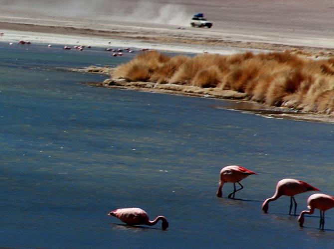 Bolivia - Itinerary Sur Lipez-Tupiza 033 / Laguna Hedionda