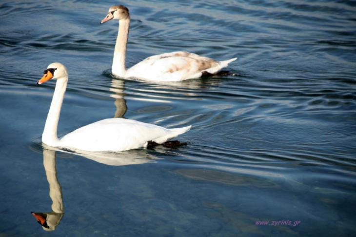 Albania 034 - Ohrid lake