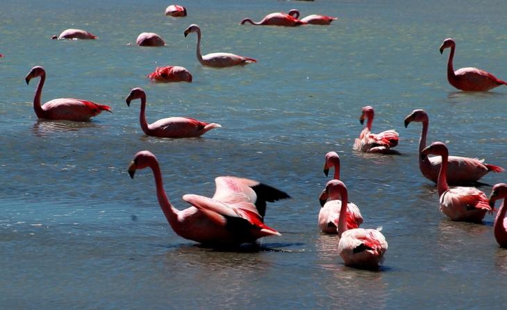Bolivia - Itinerary Sur Lipez-Tupiza 034 / Laguna Hedionda