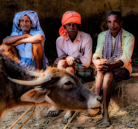 India - Odisha 035 - Animal market on the way to Rayagada
