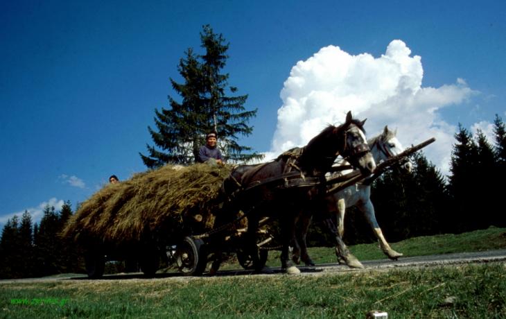 Romania 035 - On the road to Vatra Dornei
