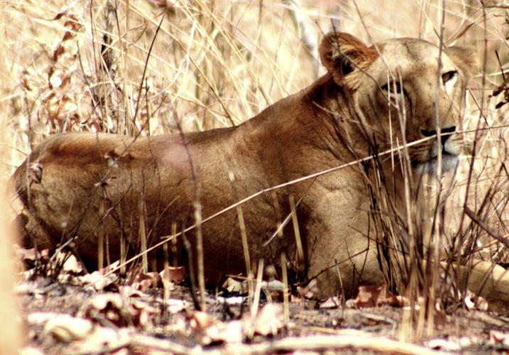 Burkina Faso - National Parks W & Arly 036