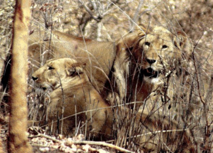 Burkina Faso - National Parks W & Arly 037
