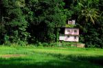 Sri Lanka - Kandy surroundings 037