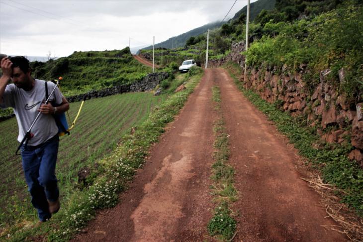 Portugal - Azores - Sao Jorge 038 - Faja dos Vimes