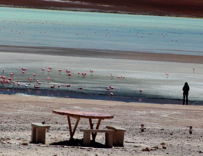 Bolivia - Itinerary Sur Lipez-Tupiza 038 / Laguna Hedionda