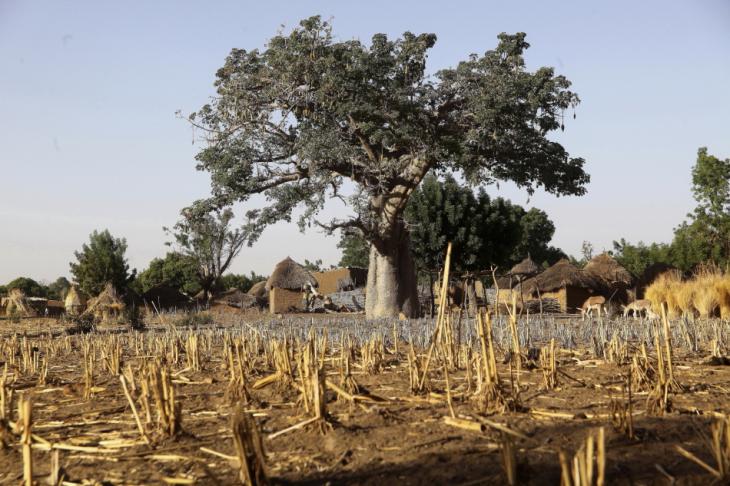 Burkina Faso - Falaise du Gobnangou 038