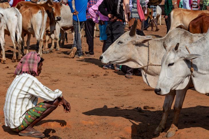 India - Odisha 039 - Animal market on the way to Rayagada