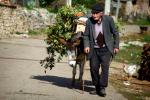Albania 041 - On the road to Prespa lake